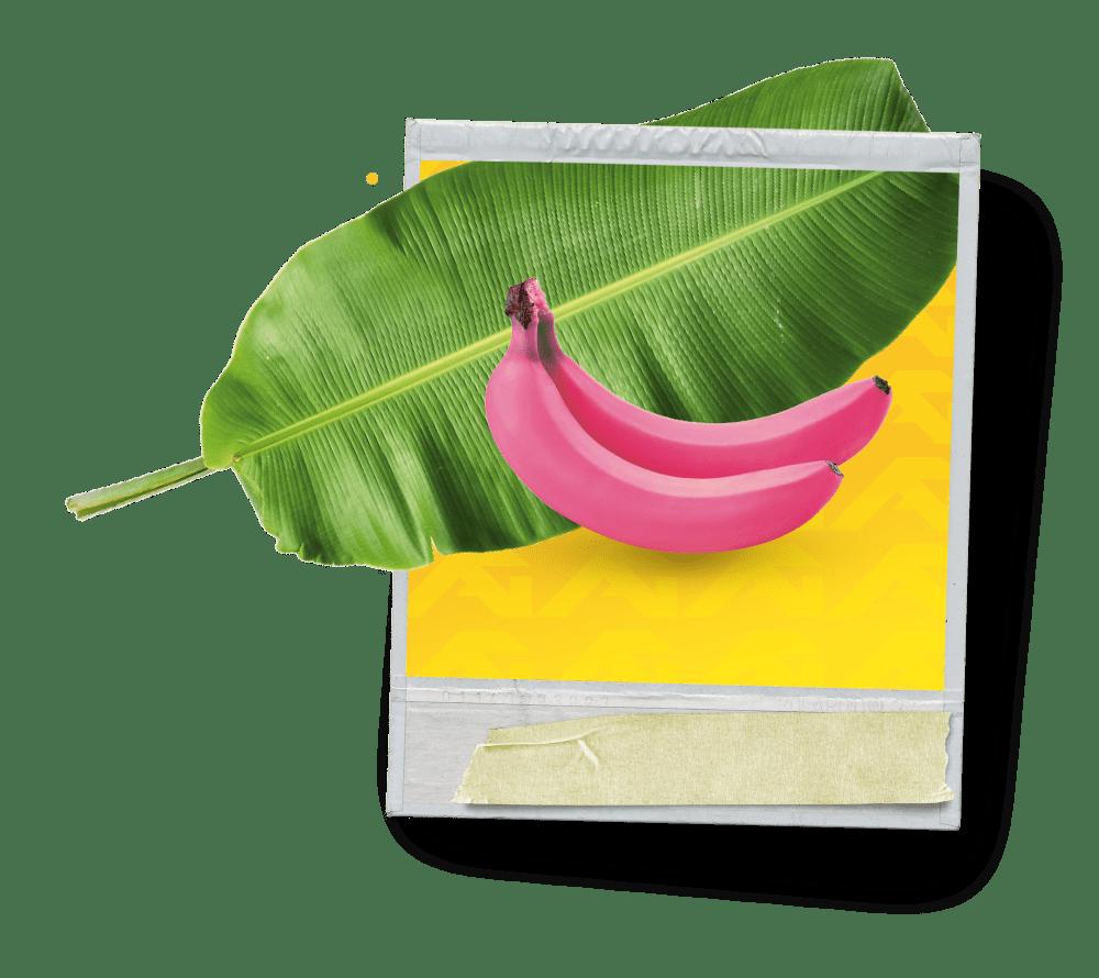 banana-giraldo-min